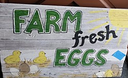 FARM FRESH EGGS Reclaimed Wood Sign